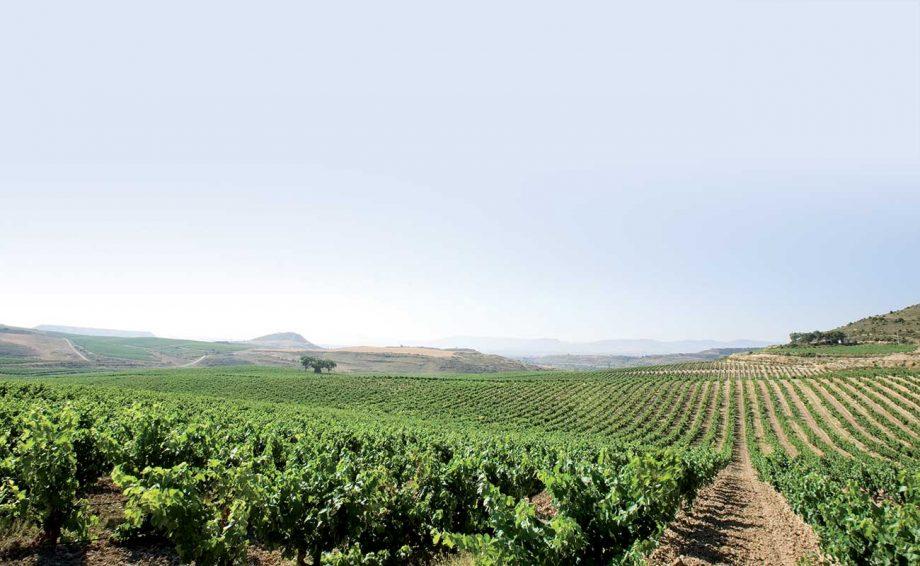 Faustino vineyards