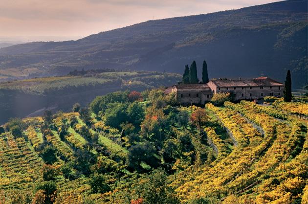 Valpolicella wine