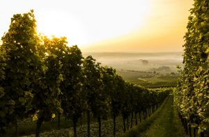 wine industry climate change