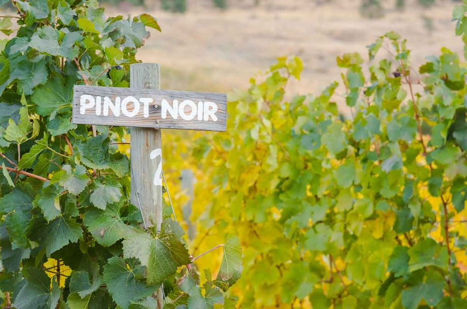 New Zealand Pinot Noir wines