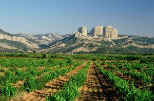 Terra Alta wines