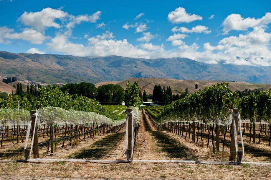 Central Otago Pinot Noir 2017