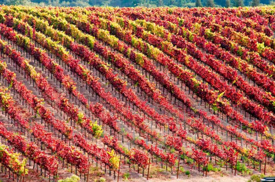 Qupé gets new home as Vintage Wine Estates buys Laetitia