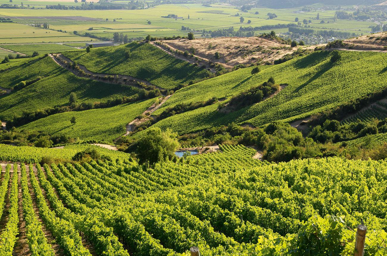 Apalta vineyards