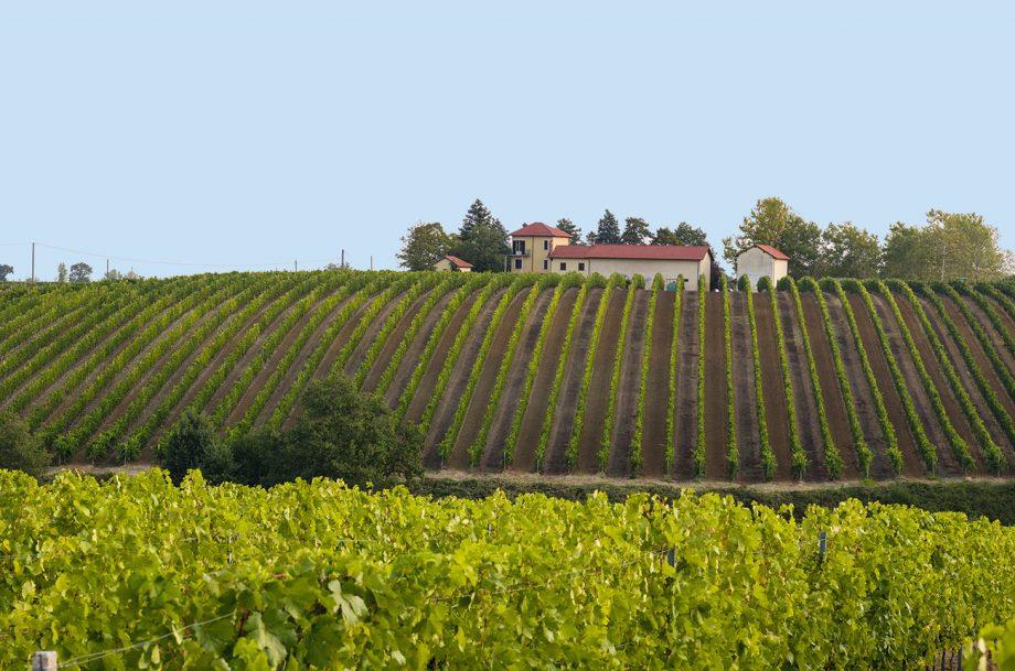 Banfi Piemonte winery