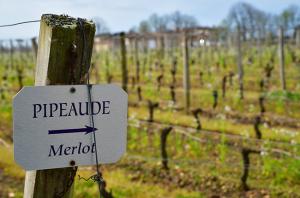 St Emilion 2018 wines