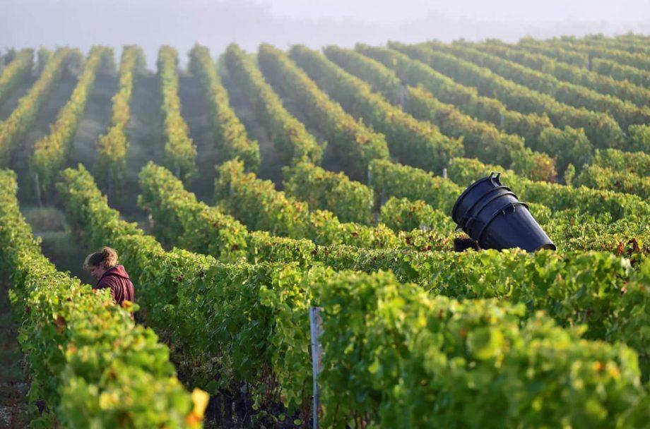 sauternes 2018 wines