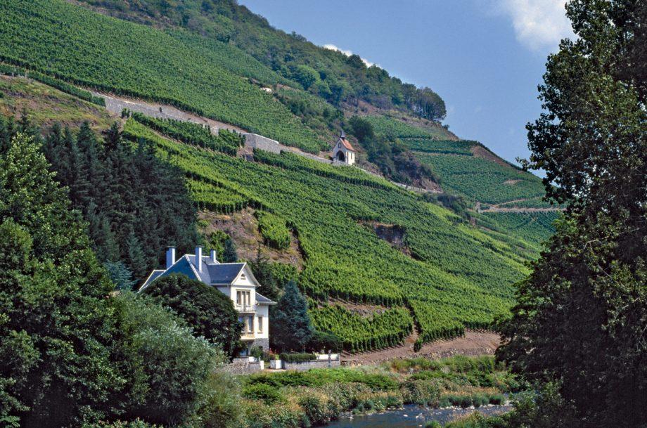 Alsace grand cru Riesling