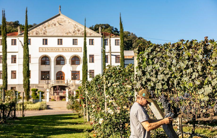 Brazil Wineries