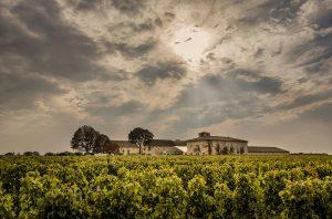 good Bordeaux vintage, Châteaux Canon vineyards