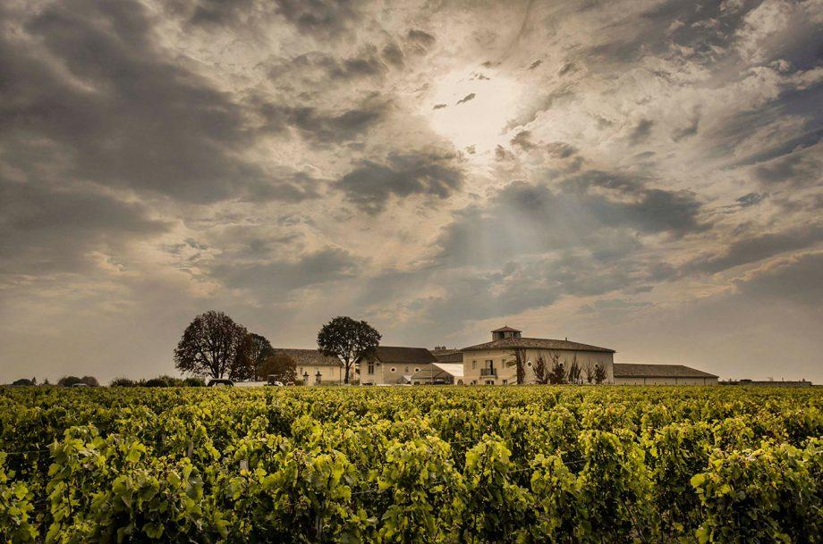 Château Canon vineyards in St-Emilion