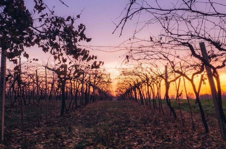 Climate change wine