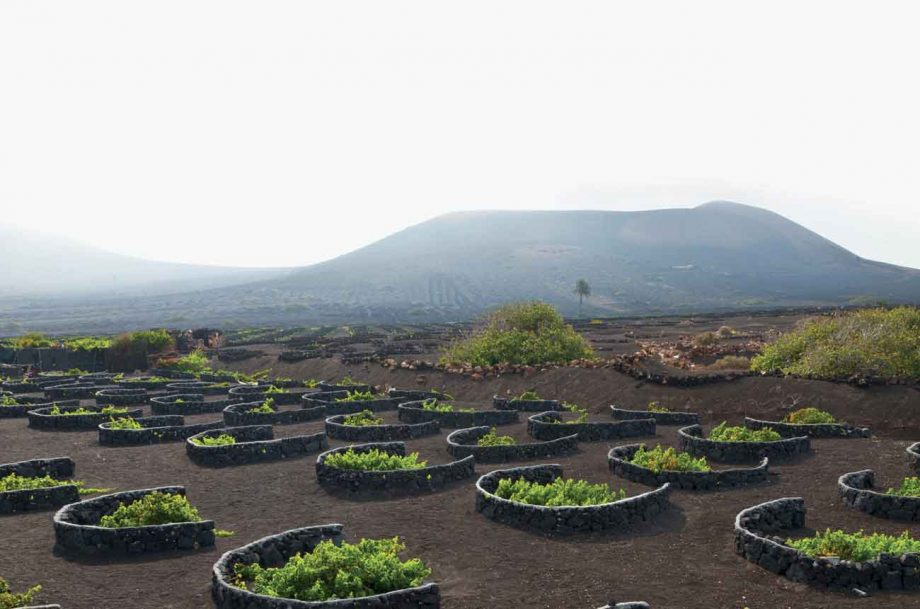 Malvasía vines in the volcanic soil at La Geria in Lanzarote on the Canary Islands