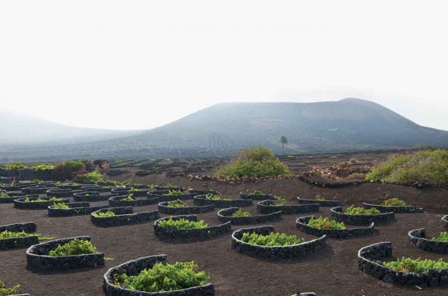 Malvasía vines in the volcanic soil at La Geria in Lanzarote on the Canary Islands