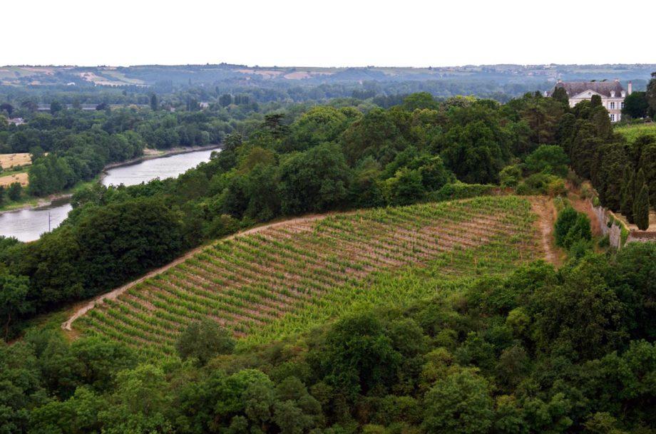Savennieres wine region