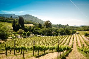 Sonoma wine region