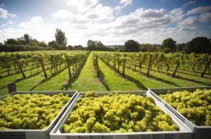 uk wines