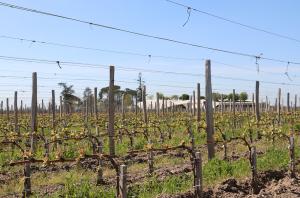 Bordeaux vineyard prices
