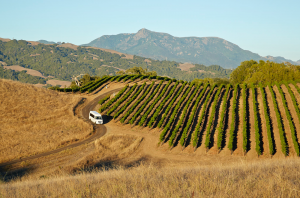 Healdsburg wineries
