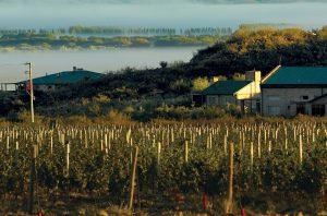 Patagonia wines