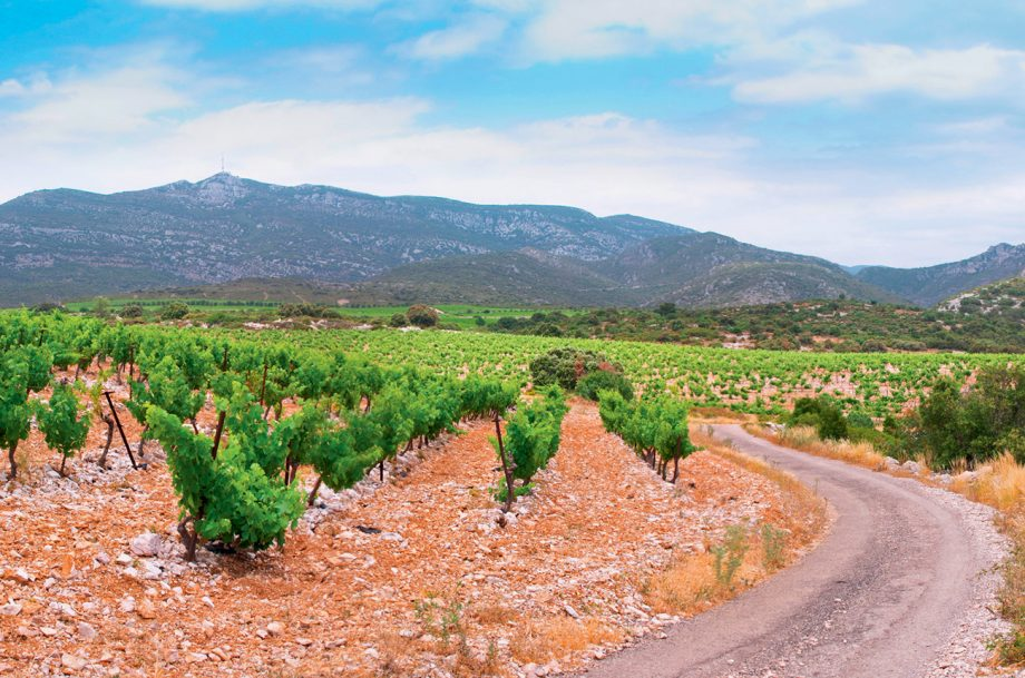 Typical garrigue scrubland adjacent to Domaine d'Aupilhac's vines in Montpeyroux