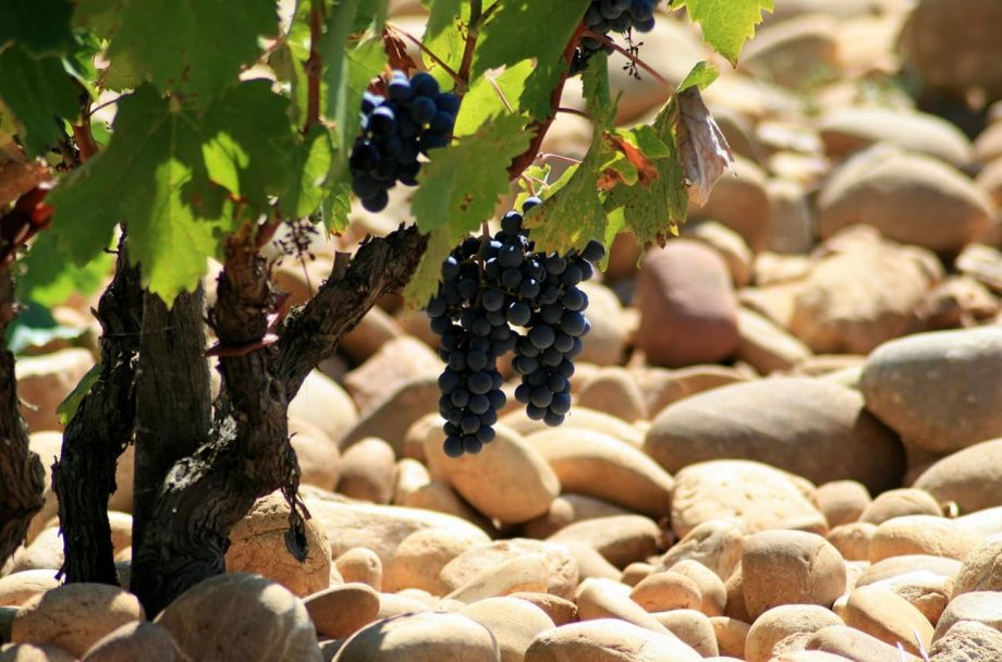 Châteauneuf-du-Pape red blends white grapes