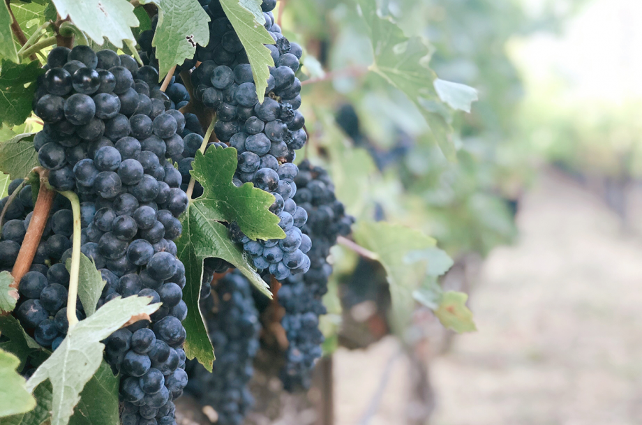 Are hybrid and ancestral wines on the rise?