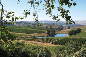 Elgin wine region