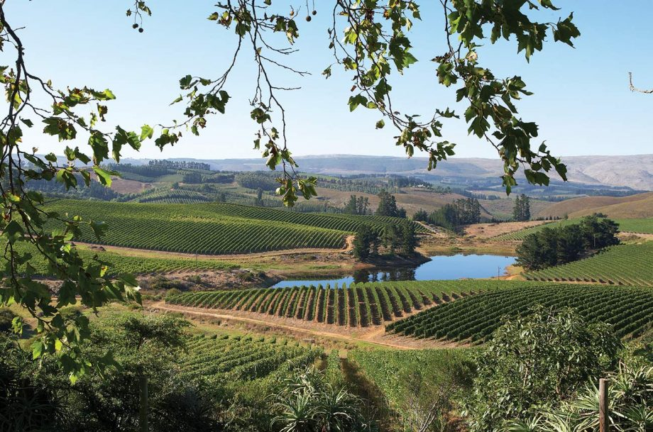 Elgin wine region