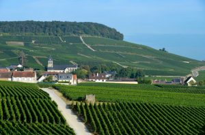 Introducing Coteaux Champenois