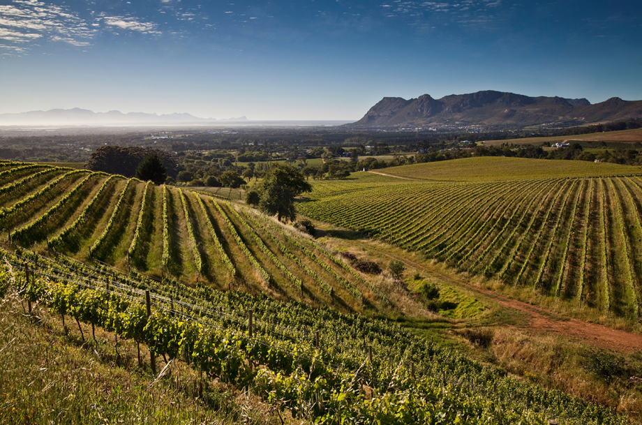 Klein Constantia wine
