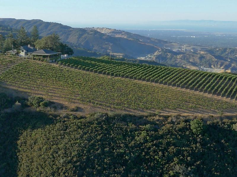 Mount Eden Vineyards perches 600m up in the Santa Cruz Mountains
