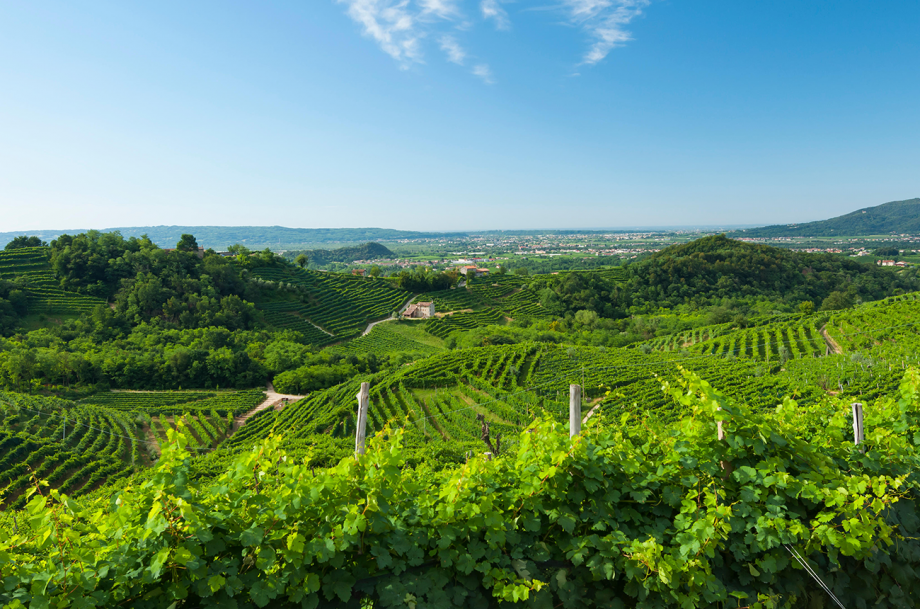 Prosecco appointed UNESCO World Heritage status