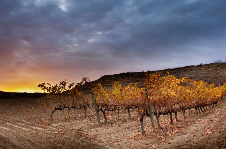 Rioja terroir diversity