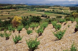 Cairanne wines, Southern Rhone