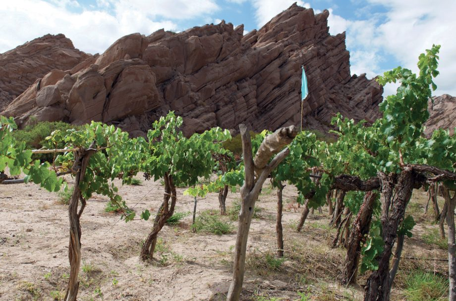 100-year-old vines in the high-up Cafayate region in Calchaquí Valley, northwest Argentina