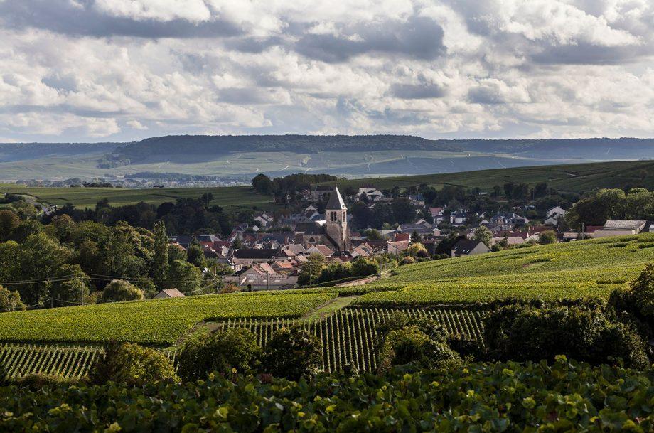Champagne de Watere vineyard