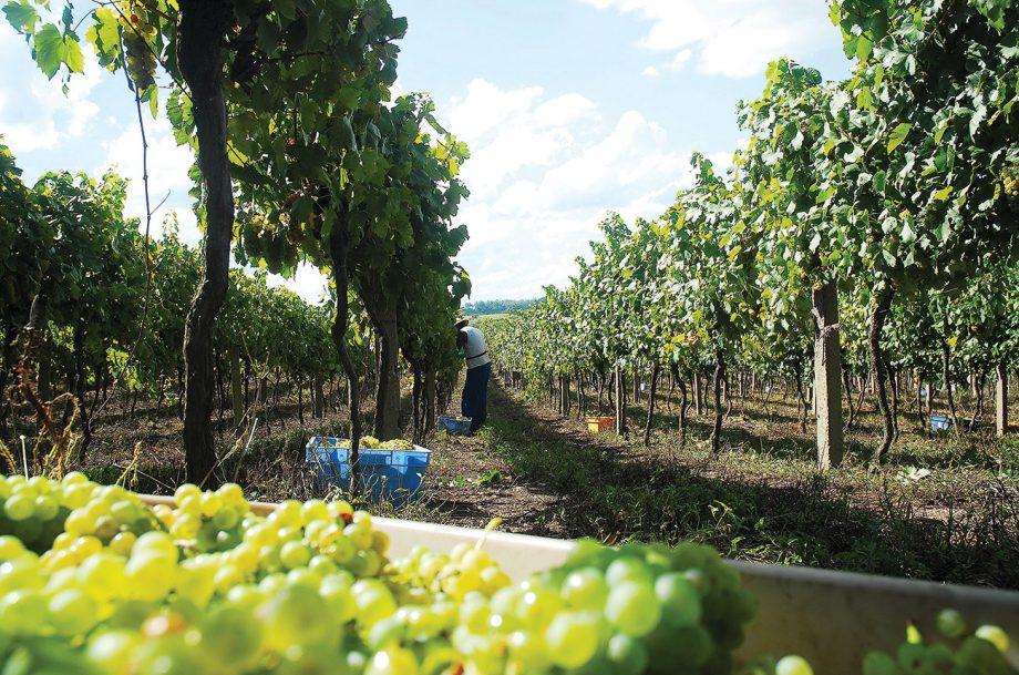 Brazil wines,