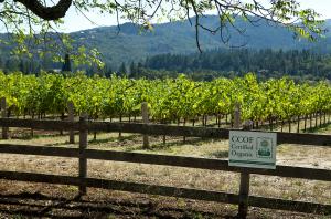 Napa Organic wineries