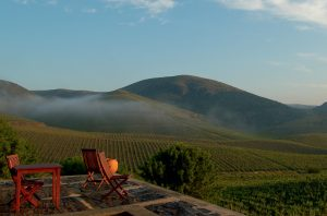 Douro wines, Ramos Pinto's Quinta de Ervamoira vineyard, planted 'vertically' without terraces