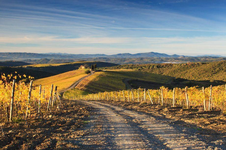 Wine Paths vineyard