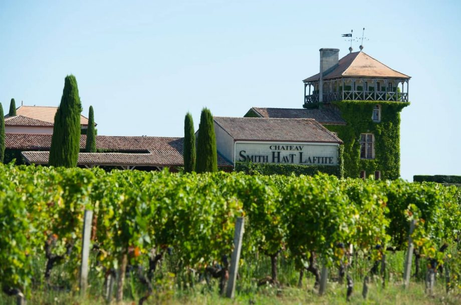 bordeaux 2019 white wine harvest
