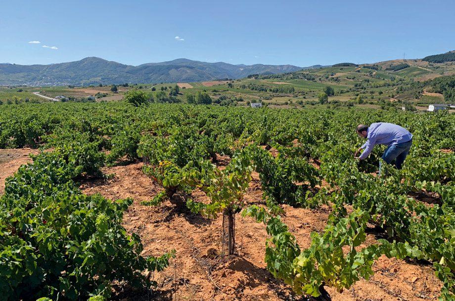 Álvarez de Toledo vineyard
