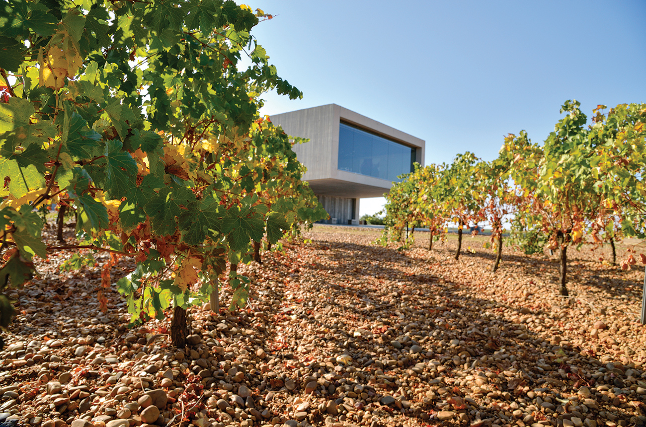 Discovering Rueda wine styles - Decanter
