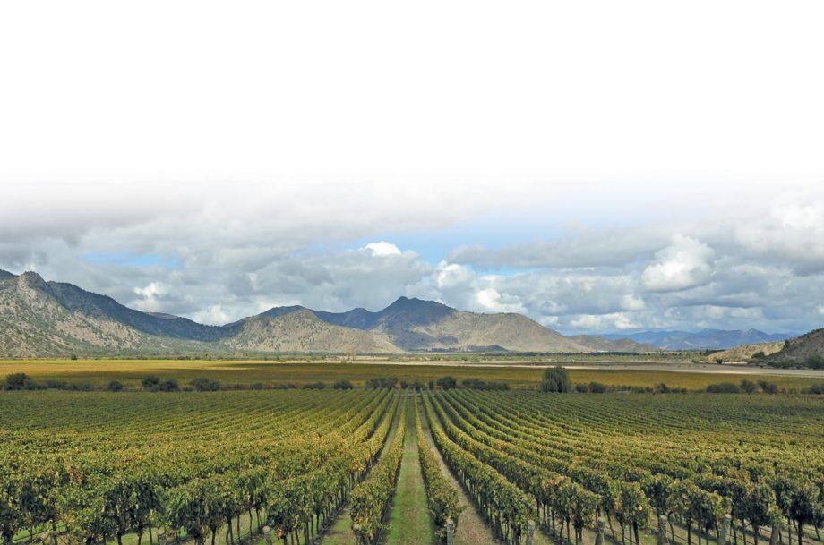 Chilean Carmenère wines