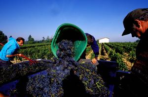 Lalande-de-Pomerol wines