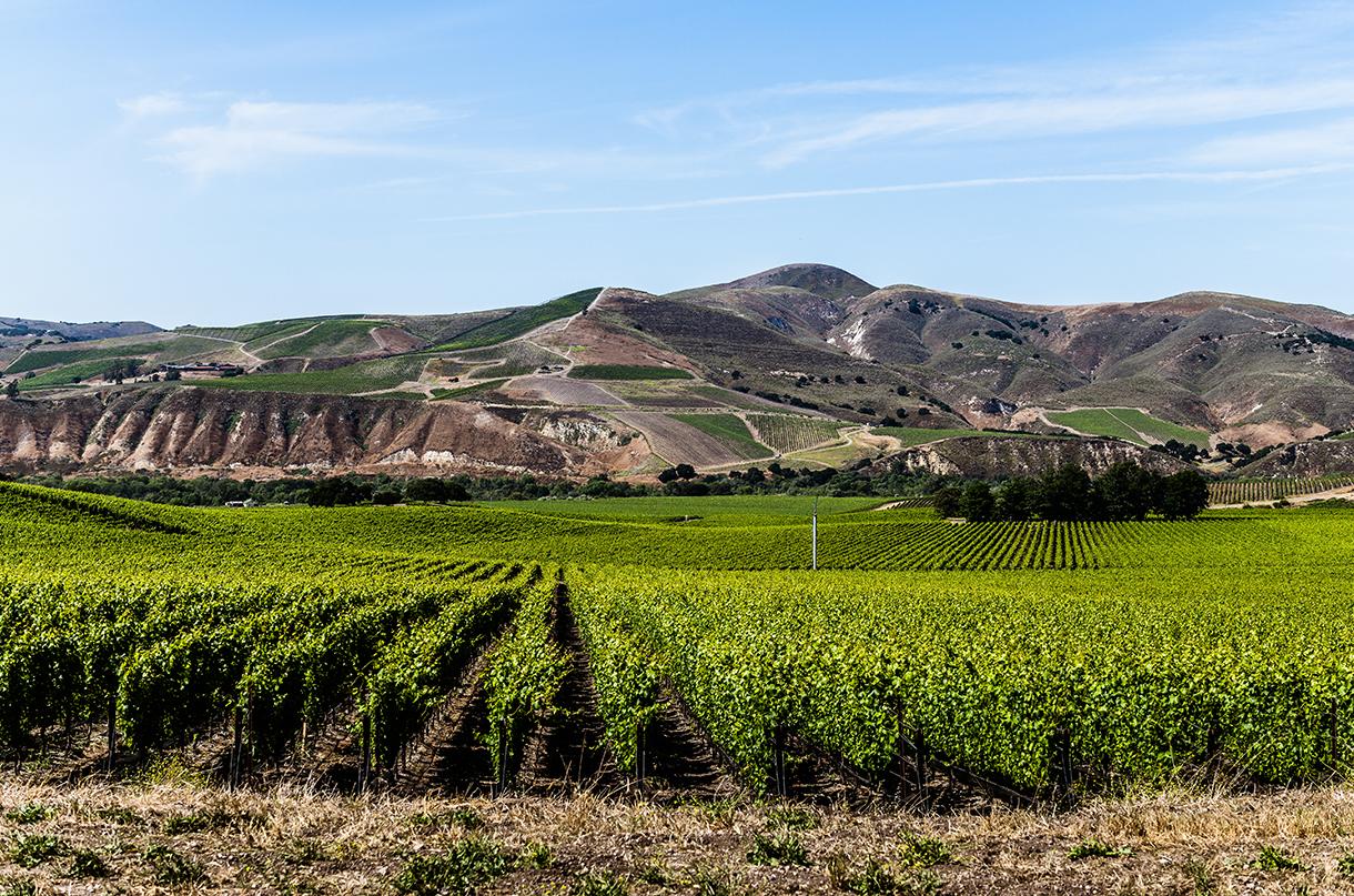 Santa Barbara County AVA – plus top wines top try - Decanter