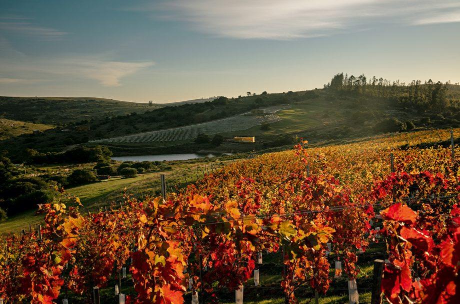 Uruguay vineyard view, Uruguay undiscovered