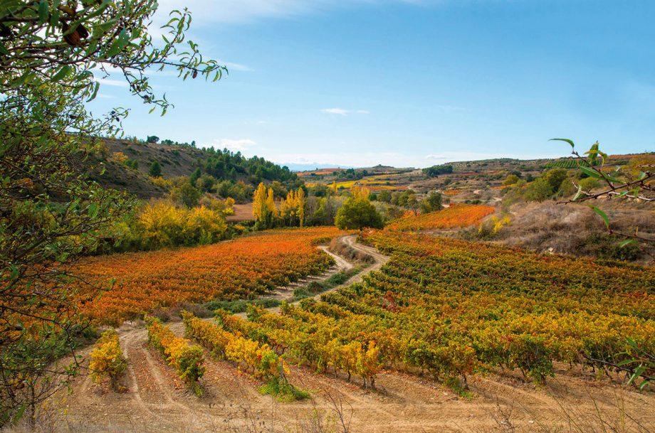 Vineyards Valdebaron area