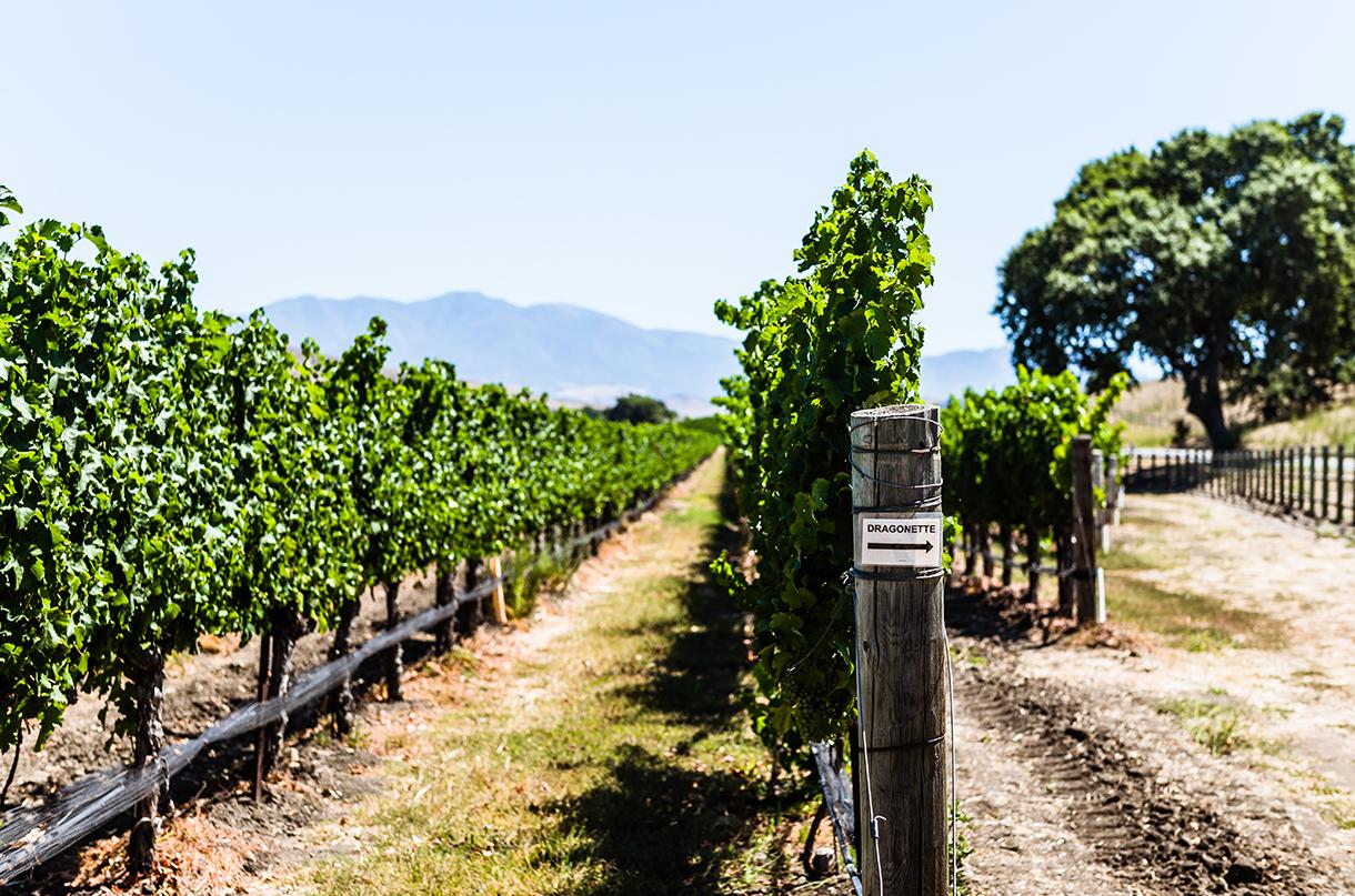 Happy Canyon AVA, Santa Barbara - plus top wines top try - Decanter